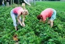 Pracownicy sezonowi: rolnicy pytają, ekspert odpowiada