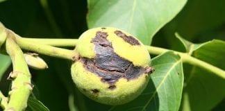 Uzupełnienie Programu Ochrony Roślin Sadowniczych