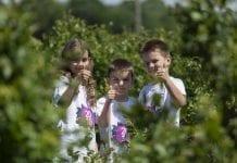 Plantatorzy borówki promują zdrowy styl życia