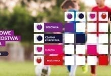 Jagodowe Mistrzostwa Świata w Piłce Nożnej