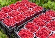 Na rynku jagodowych będzie ciaśniej