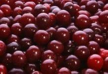 UOKiK stawia zarzuty przetwórcy owoców