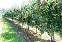 100 tysięcy hektarów sadów i jagodników