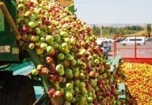 ZSRP po protestach: są szanse na podniesienie cen jabłek