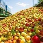 Rozpoczyna się batalia o jabłko przemysłowe