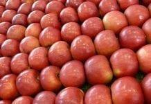 Chile największym dostawcą świeżych owoców do Chin