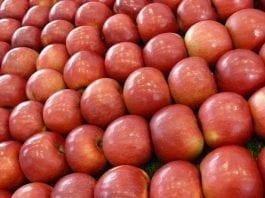 Ile jabłek zbierze Chile?