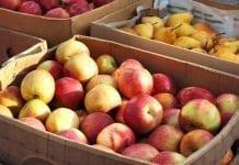 Jabłka na wschodzie Europy