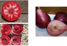 Włoskie nowości badawcze o czerwonych gruszkach, jabłkach i brzoskwiniach