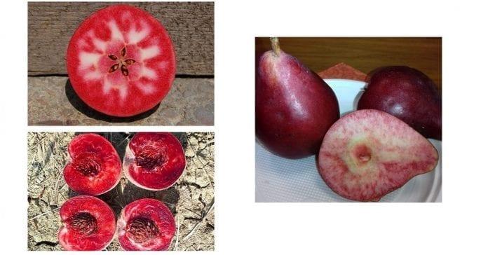 Czerwony miąższ jabłka, grusze, brzoskwinie