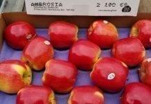 Kanada: Popyt i produkcja (dwukolorowych) jabłek Ambrosia nadal rośnie