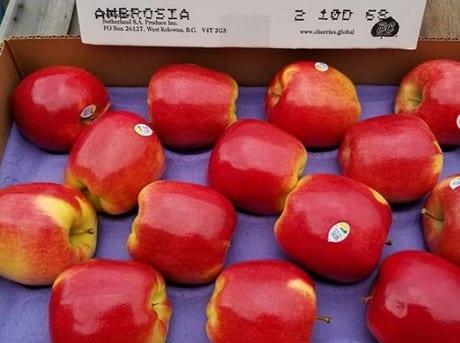 Dwukolorowe jabłka Ambrosia