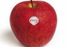 Promocja jabłek premium po Nowozelandzku