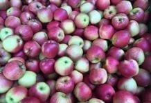 Ceny jabłek – raport z rynków hurtowych – 11 luty 2019