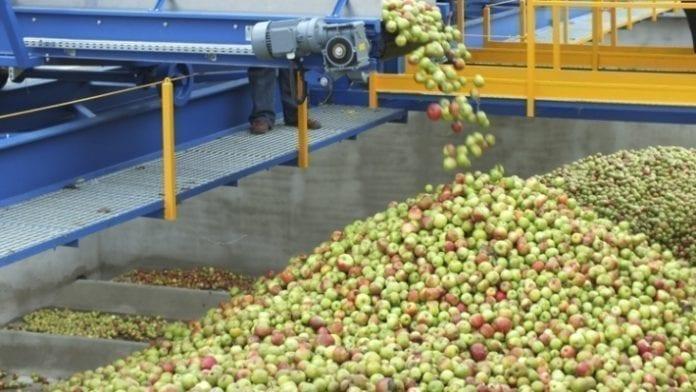 jabłka przemysłowe - Eskimos skup
