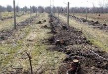 Jak ograniczyć skutki zmęczenia gleby