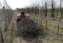 Palić czy rozdrabniać gałęzie w sadzie