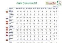 Produkcja jabłek w UE