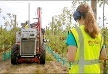 Roboty zbierają jabłka