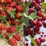 Podaż, popyt, konkurencja – czyli jak zarobić na handlu owocami