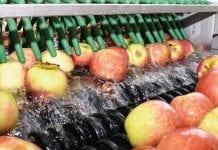 Bezpieczeństwo i jakość owoców po zbiorze