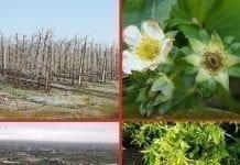Siła natury i jej wpływ na ceny owoców