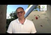 Komunikat Sadowniczy zalecenia PROCAM z 04.06.2019
