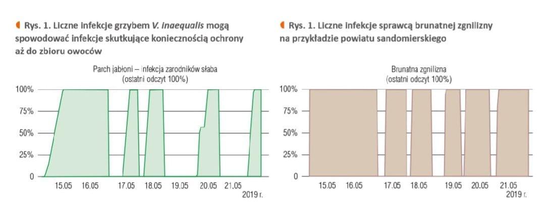 Liczne infekcje - sady jabłoniowe maj 2019