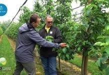 Aktualna sytuacja w sadzie w Faliszowicach