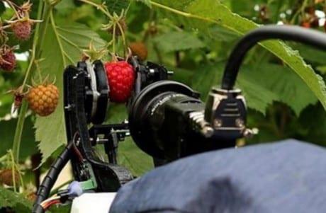 Robot to zbioru owoców jagodowych
