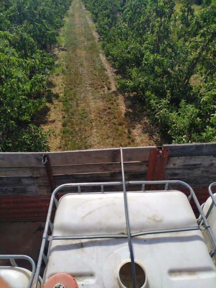 Podlewanie sadu daleko od domu - lipiec 2019