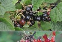 Zmiany strategii zakupu owoców