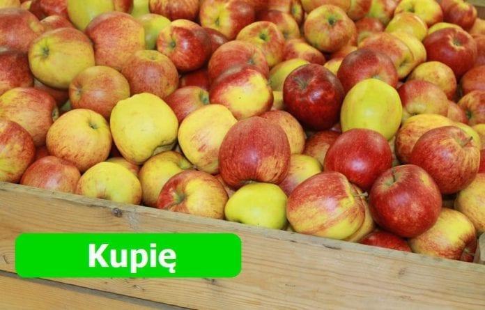 Kupię jabłka - czy taki będzie sezon 2019