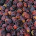 Jakość mołdawskich śliwek wyjątkowo dobra – zwiększony import do Niemiec