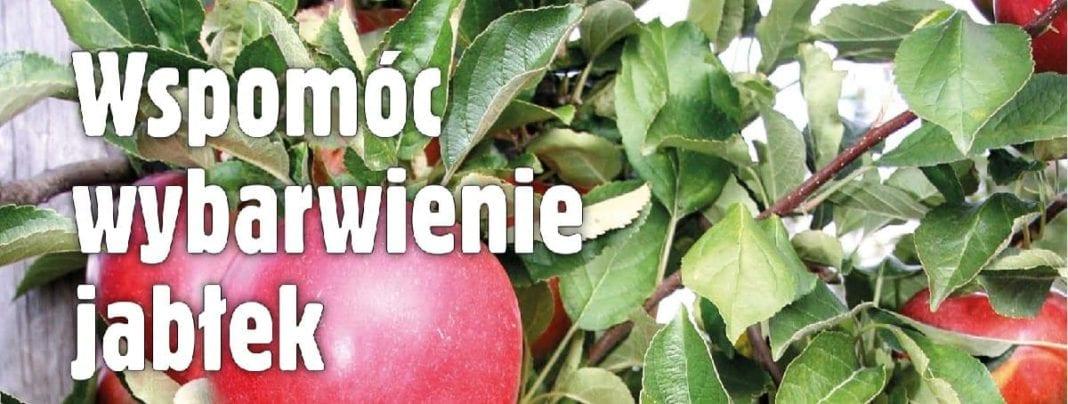 WWspomóc wybarwienie jabłek