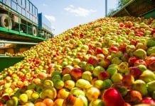 Spadki cen jabłek przemysłowych – 17.09.2019