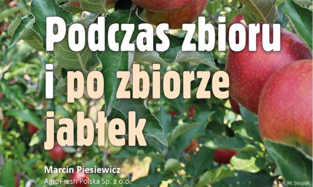 Podczas zbioru i po zbiorze jabłek