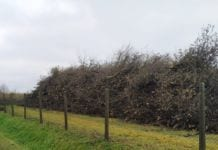 Drzewo z karczowanego sadu