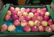 Jabłka Gala w markecie
