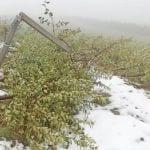 Śnieg w Trydencie zniszczył sady, powodzie w Toskanii