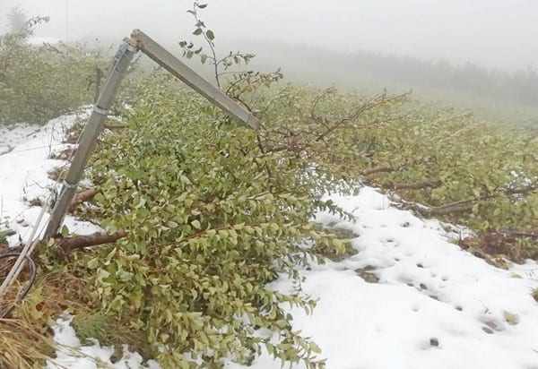 Śnieg w Trydenci zniszczył sady, powodzie w Toskanii - listopad 2019