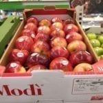 Włochy jabłka Modi