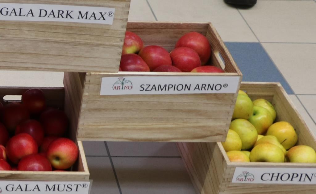Jabłka odmiany Szampion Arno