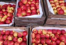 Jabłka - rynek hurtowy w Sandomierzu