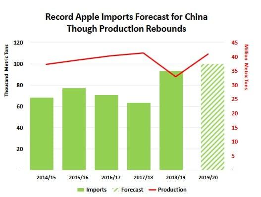 Chiny - prognozy produkcji jabłek