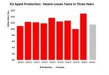 Globalna produkcja – więcej jabłek, ale mniej przeznaczonych do przetwórstwa