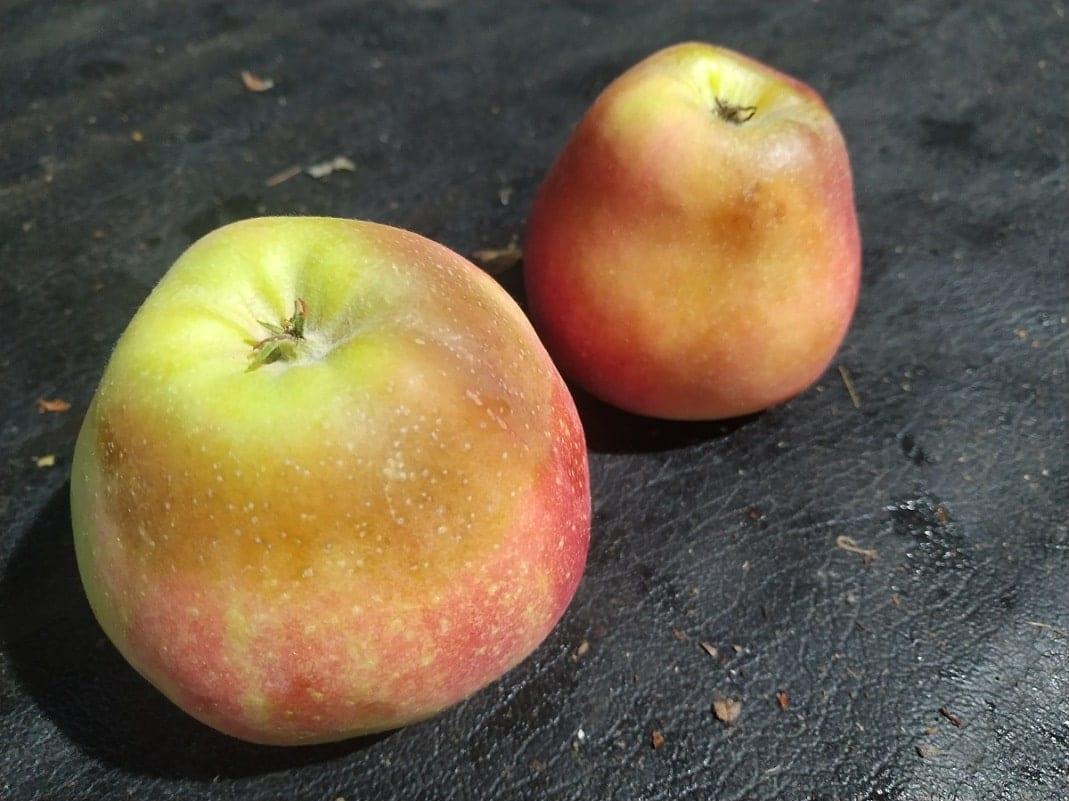 Rozpad starczy jabłek