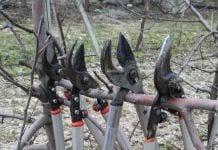 Zimowe cięcie drzew owocowych - sekatory