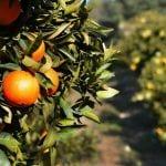 Hiszpańscy rolnicy coraz radykalniej walczą z importem udającym hiszpańskie warzywa i owoce!