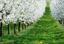 Sad wiosną - Program ratowania i poprawy kondycji roślin sadowniczych wiosną 2020 roku.